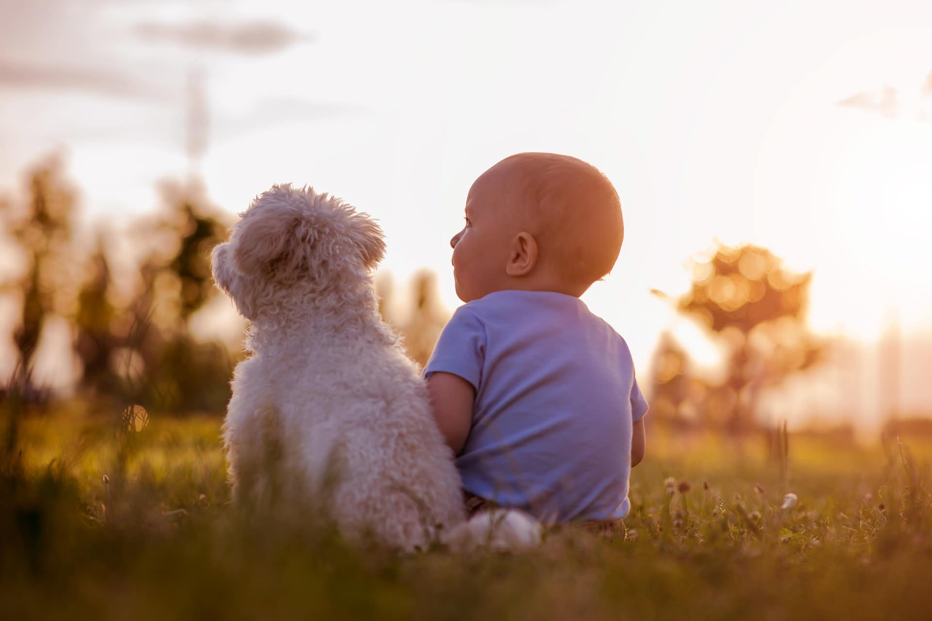 Dogs-and-Kids--Umgangsrgeln--Kleinkind-mit-Hund